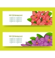 bannner with lilies floral background vector image