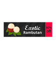 Rambutan tropical fruit on sale vector image