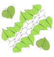 green leaves line on white vector image