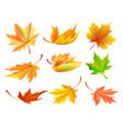 fallen golden yellow leaves vector image