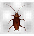 brown cockroach on transparent background vector image