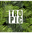 Tropical Palm Tropical Leaves Background vector image