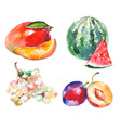 watercolor vruits isolated on white vector image