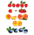 Collection of fruit and berries raspberry peach vector image