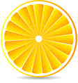 orange segment isolated on a white vector image