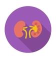 Human Kidney vector image