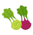 colorful kohlrabi heads with leaves isolated vector image