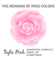 Light pink rose infographics vector image vector image
