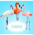 Three beautiful flamingos on a blue background vector image