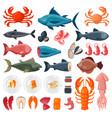 sea food vector image vector image