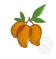 hand drawn mango fruits vector image