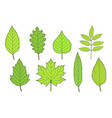 hand drawn set of green leaves vector image