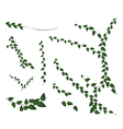 A Set of Creeper Plant on White Background vector image