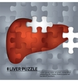 Liver from puzzle pieces vector image