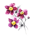 Bouquet of summer flowers vector image