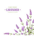 bunch of lavender flowers vector image