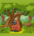 orangutan lives in the forest vector image