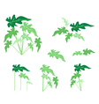 A Set of Philodendron Leaves on White Background vector image vector image
