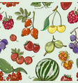 set of different berries pattern vector image