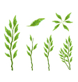 Set of Pedilanthus Tithymaloides Leaves vector image