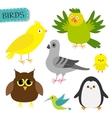 Bird set Colibri canary parrot dove pigeon vector image