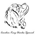Cavalier King Charles Spaniel vector image