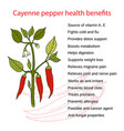 cayenne pepper health benefits vector image