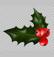 christmas holly with ripe red berries isolated vector image
