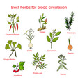 herbs for blood circulation vector image