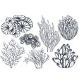 collection of hand drawn ocean plants and vector image