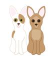 Chihuahuas vector image