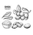 shea butter drawing isolated vintage vector image