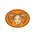 Bighorn sheep or ram vector image