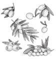 black ink set of hand drawn olive twig vector image
