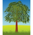 Solitary tree on glade vector image