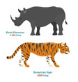 tiger action wildlife animal danger rhinoceros vector image