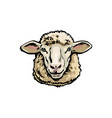 front view sketch portrait of domestic farm sheep vector image