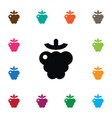 isolated berry icon shrubby plant element vector image
