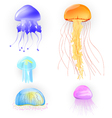 Jellyfishes vector image