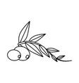 olive fruit cartoon vector image