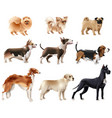 dog breeds icon set vector image
