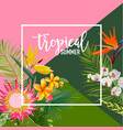 tropical flowers summer banner graphic vector image