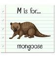 Flashcard letter M is for mongoose vector image