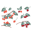 Set of Red Cherries on White Background vector image