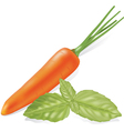 Carrots and basil vector image vector image