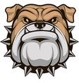 Head ferocious bulldog vector image