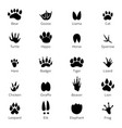 different footprints of birds and animals vector image