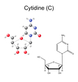 Chemical formula and model of cytidine vector image