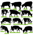 12 cows silhouettes set vector image