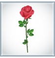 Flower red rose isolated vector image